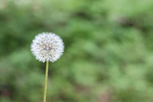 Difendersi da allergie